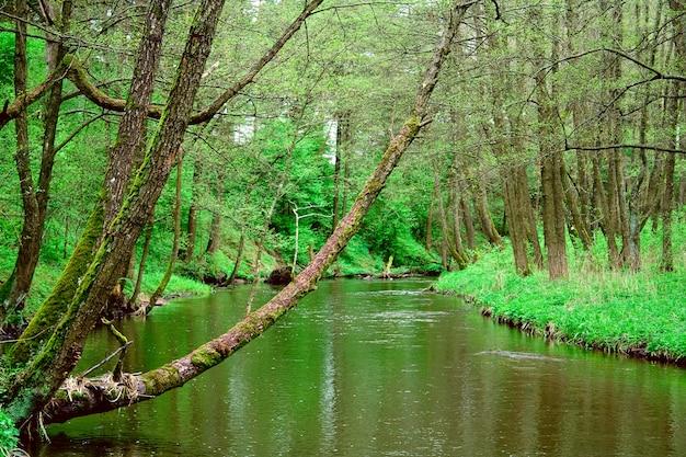 Drewniana rzeka