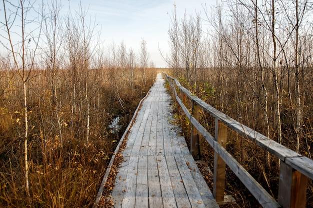 Drewniana ścieżka chodnikowa przez tereny podmokłe. jesienny czas.