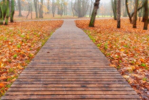 Drewniana ścieżka lub ścieżka z desek w leśnym parku w jesienny dzień w zielenogradzku.