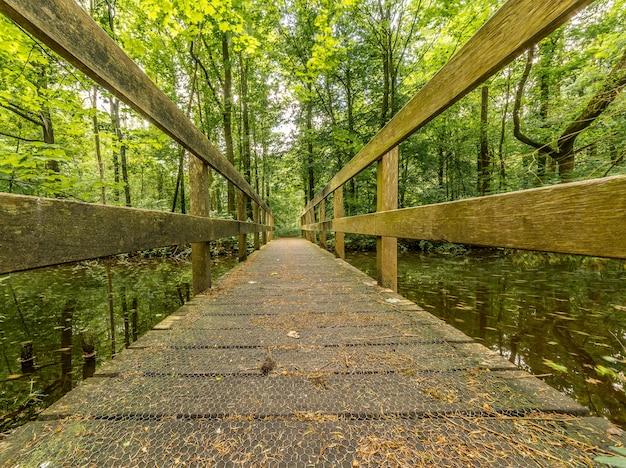 Drewniana ścieżka nad wodą z zielonymi drzewami w oddali w lesie