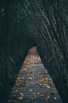 Drewniana ścieżka spacerowa w lesie namorzynowym, poczuj naturę, odpręż się i zrelaksuj