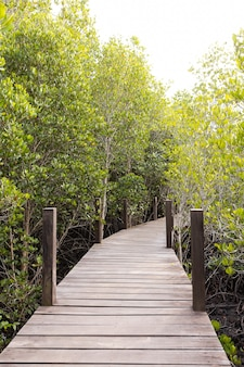 Drewniana ścieżka spacerowa w lesie rhizophora apiculata blume na terenie czerwonych namorzynów, specjalne drzewo z podporą lub korzeniem przypory, a także do napowietrzania