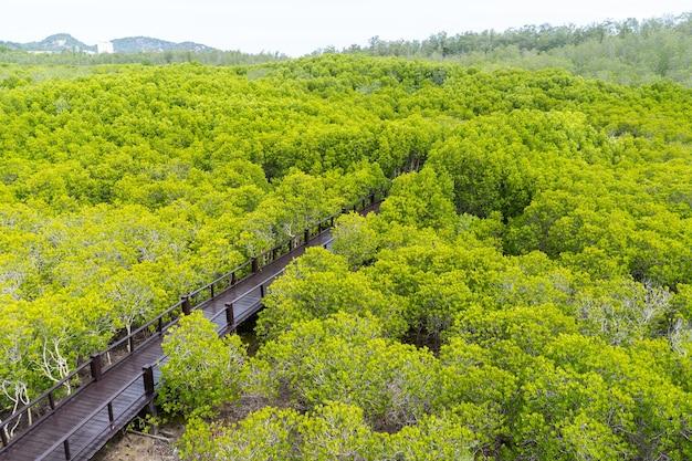 Drewniana ścieżka w tropikalnym lesie deszczowym