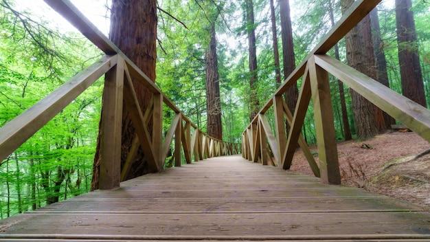 Drewniana ścieżka z ogrodzeniem przez gigantyczny las sekwoi