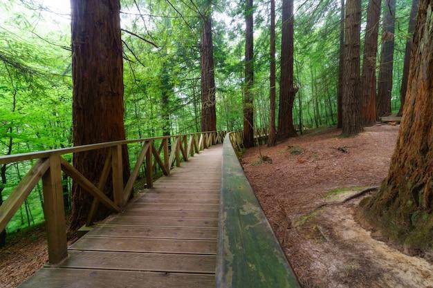 Drewniana ścieżka z ogrodzeniem przez las sekwoi
