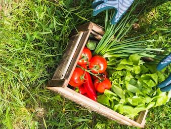 Drewniana skrzynka z świeżymi organicznie warzywami na zielonej trawie