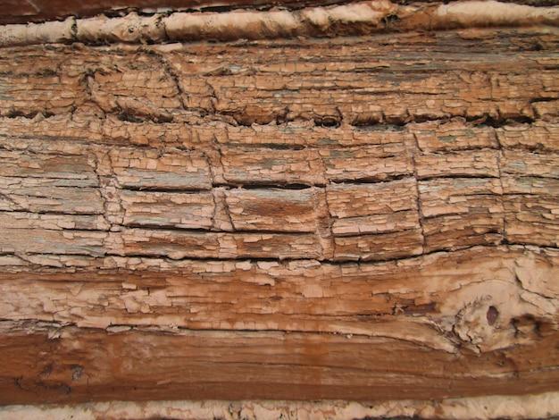 Drewniana tekstura. kora drzewa. kora tekstury naturalne tło.