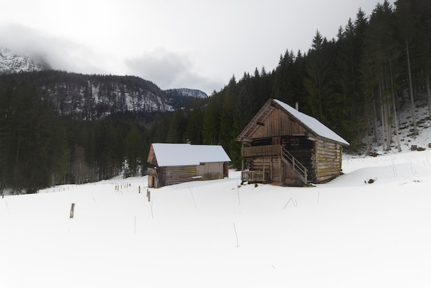 Drewniane domy w górach ze śniegiem i otoczone sosnami.