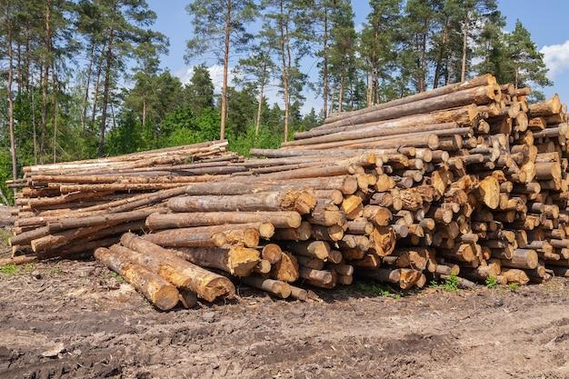 Drewniane kłody piętrzyły się na ziemi