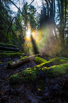 Drewniane kłody pokryte zielonym mchem w lesie z jasnymi promieniami słońca w