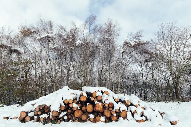 Drewniane kłody ułożone w stos pokryty śniegiem w lesie