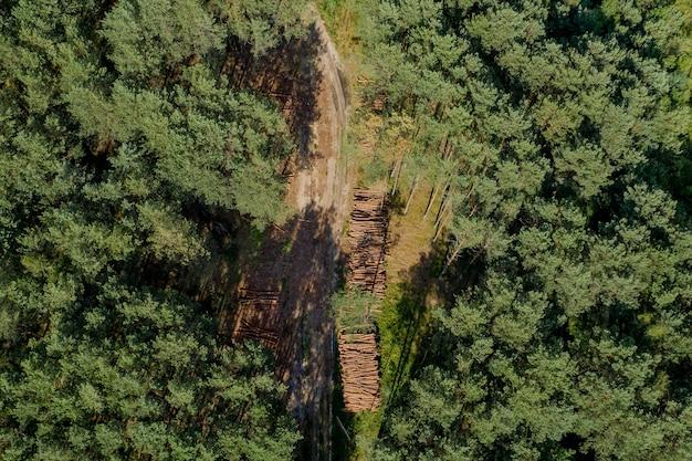 Drewniane kłody z sosnowego lasu