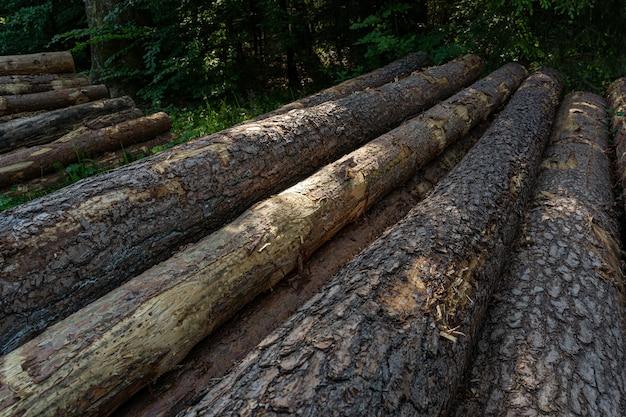 Drewniane pnie ułożone w lesie