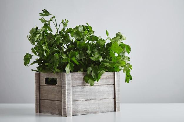 Drewniane pudełko z świeżą zieloną pietruszką i kolendrą na białym tle na widok z boku biały stół