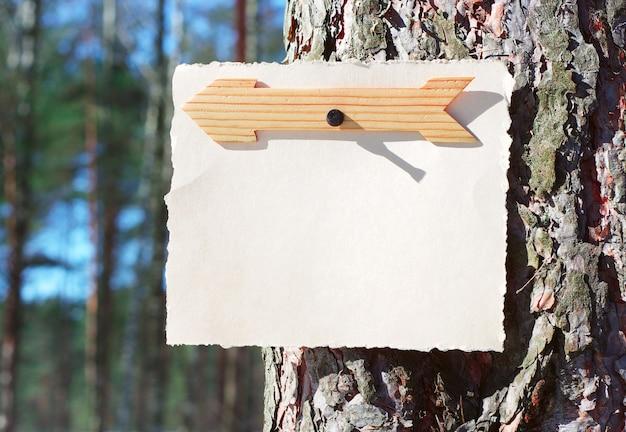Drewniane strzałki znak i papier do notatek w lesie na drzewie w jasnym słońcu