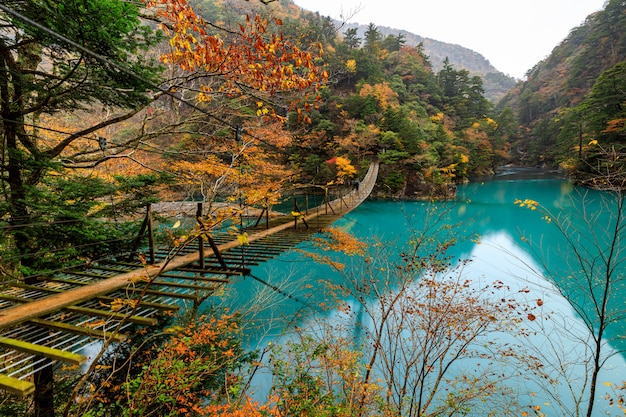 Drewnianego mosta zawieszenie nad zieloną rzeką w naturalnym lasowym jesień sezonie japan