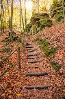 Drewniani schodki między drzewami kokorin w północnych cyganerii w jesieni, republika czech