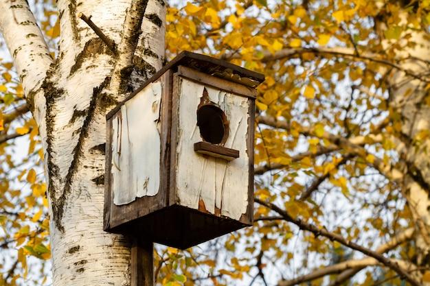 Drewniany birdhouse na brzozy w parku wśród jesień liści