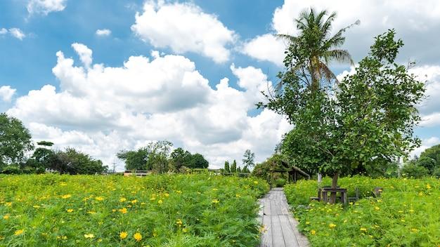 Drewniany chodnik do zobaczenia cosmos garden