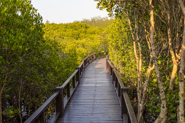 Drewniany chodnik w lesie namorzynowym