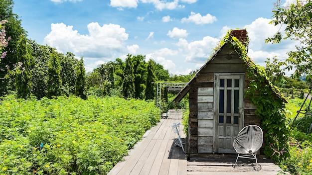 Drewniany chodnik z widokiem na ogród kwiatowy cosmos lub meksykańskiego aster