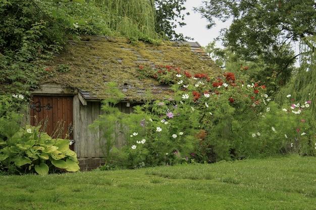Drewniany dom w trawiastym polu, otoczony roślinami i kwiatami