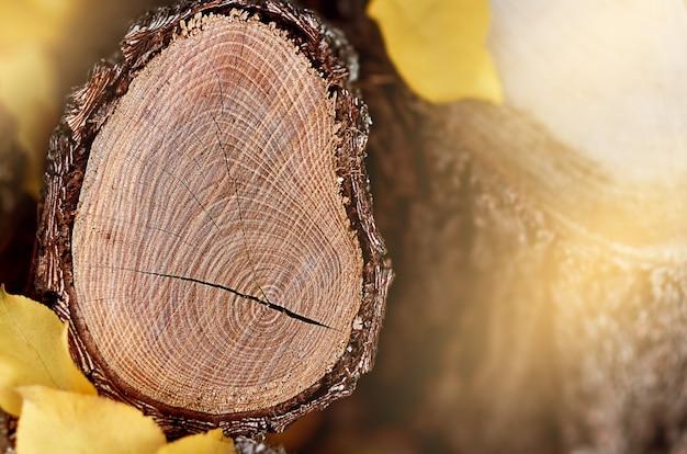 Drewniany kikut z żółtymi liśćmi jesienią
