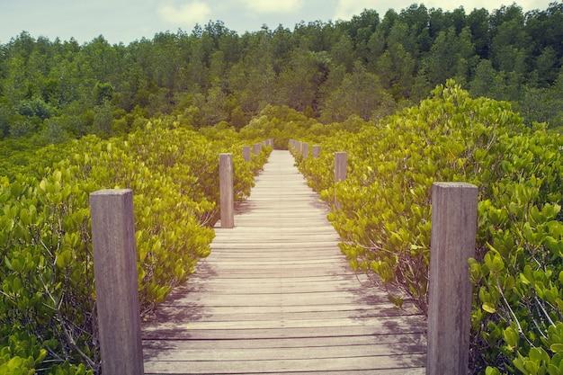 Drewniany Mały Most Na Leśnej Perspektywie Znikającego Punktu Namorzynowego Premium Zdjęcia