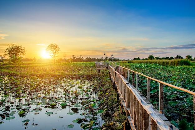 Drewniany most i lotos