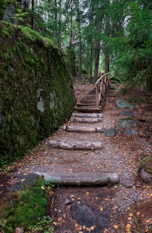 Drewniany most i schody w północnym lesie wśród głazów i jodeł, w letni dzień. trasa ekologiczna park monrepo w wyborgu
