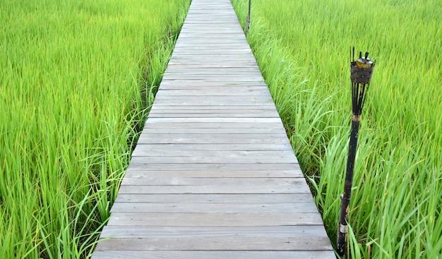 Drewniany most na polu ryżowym