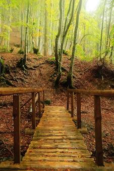 Drewniany most nad górską rzeką w jesiennym lesie