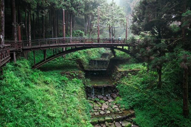 Drewniany most w lesie przy alishan, taiwan