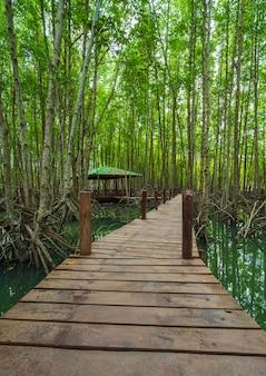 Drewniany most w namorzynowym lesie przy dzwoniącym prong paskiem, rayong, tajlandia