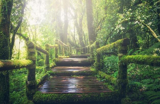 Drewniany most w tropikalnym lesie tropikalnym