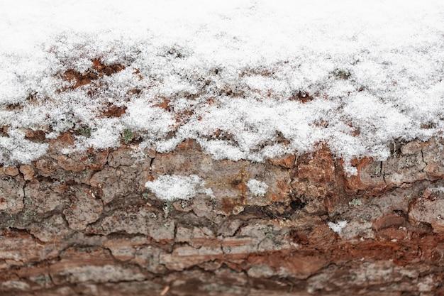 Drewniany pień drzewa ze śniegiem