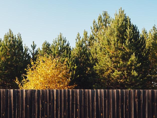 Drewniany płot we wsi z pięknymi jesiennymi drzewami.
