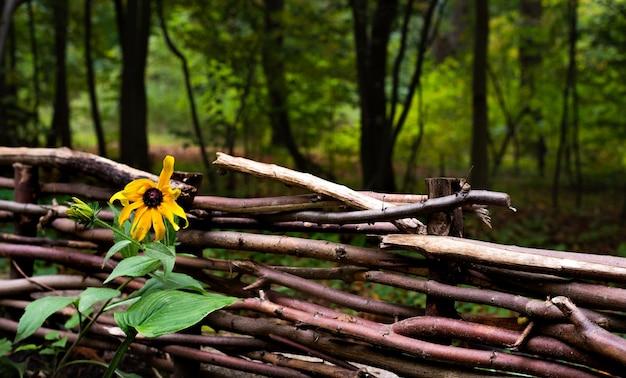 Drewniany płot z żółtym kwiatem. ogrodzenie z gałęzi.