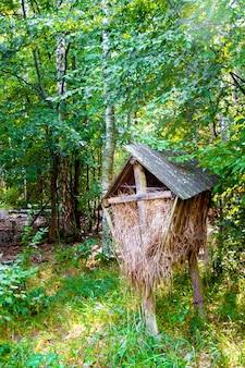 Drewniany podajnik dla dzikich zwierząt z sianem w jesiennym lesie