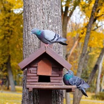 Drewniany podajnik dla ptaków. zielone tło.