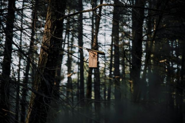 Drewniany ptasi dozownik na drzewie w lesie
