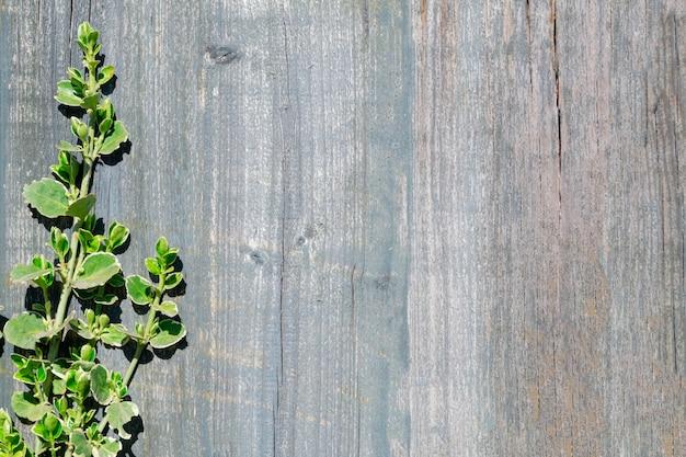 Drewniany tło i młode gałązki roślina z zielonymi liśćmi na słonecznym dniu. miejsce na tekst.