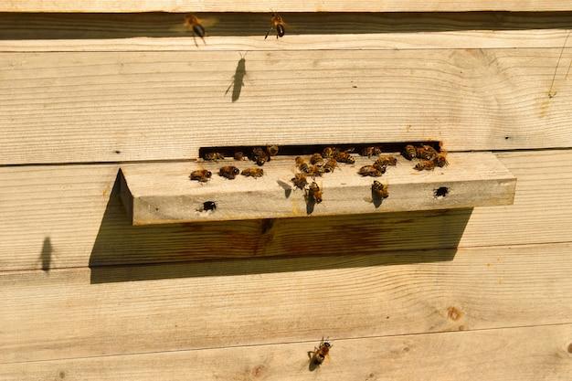 Drewniany ul. dom dla pszczół na polu w lecie.