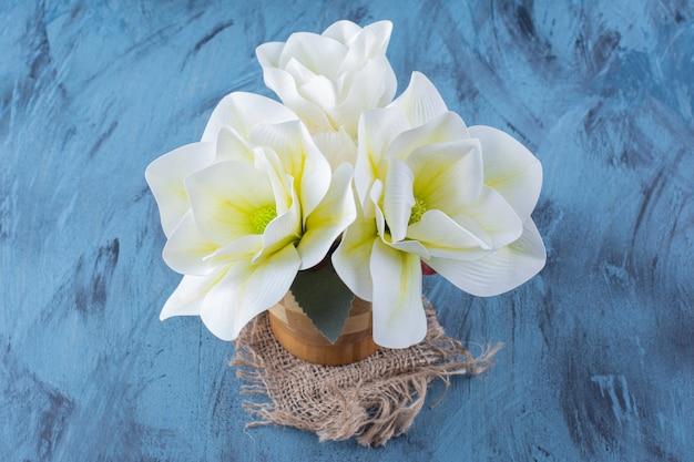 Drewniany wazon białych kwiatów magnolii na niebiesko.