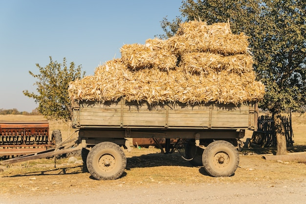 Drewniany wózek z belami siana. zbiór jesienią. rolnictwo i rolnictwo.