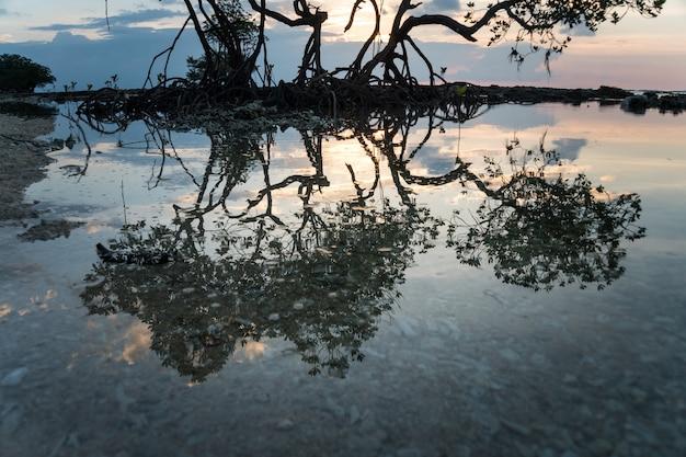 Drewno odbite w wodzie morskiej. słońce świeci przez drzewa namorzynowe korzenie namorzynowego drzewa namorzynowego erozji morskiej