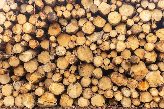 Drewno okrągłe ułożone w stos w tartaku. zbliżenie. tło