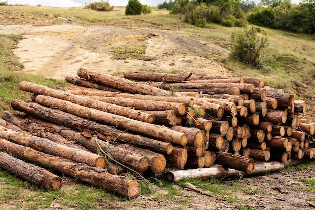 Drewno sosnowe notuje w lesie
