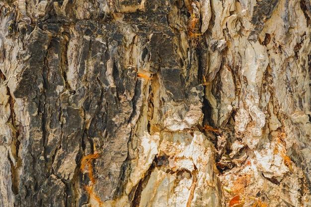 Drewno tekstury skóry tło