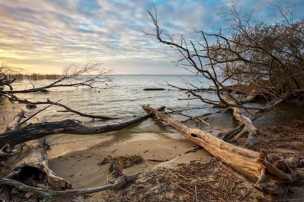 Driftwoods. szare gałęzie drzew leżące nad wodą, suche martwe drewno w jeziorze
